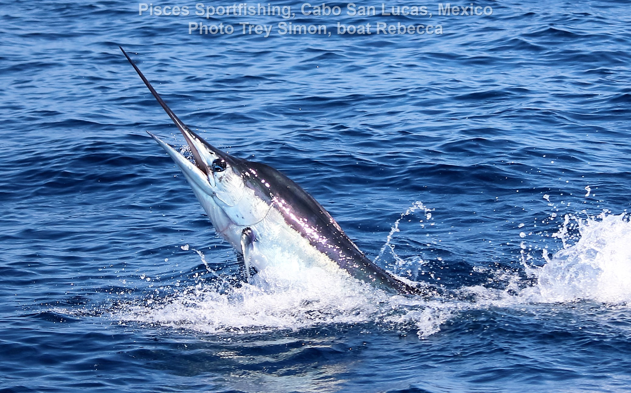Cabo fishing report pisces cabo fishing report 22nd to for Pisces fishing cabo