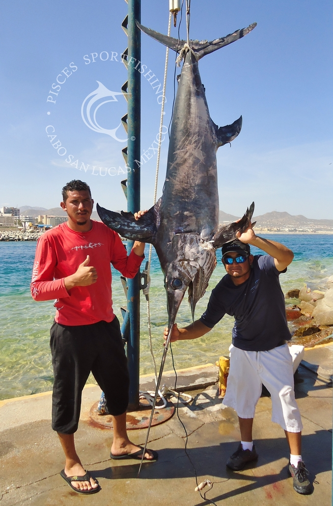 Cabo news first swordfish of the season in cabo for Cabo fishing seasons