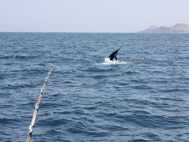 Sport fishing activities in los cabos itravel cabo for Los cabos fishing